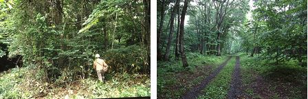 image:(Left)The Afan Forest at the initial phase of the project, (Right)The forest is restored as a result of our project