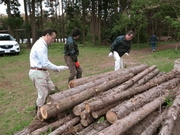 Collecting timber from thinned-out trees