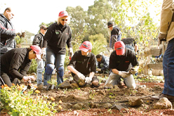 image:Australia: Planting trees with customers